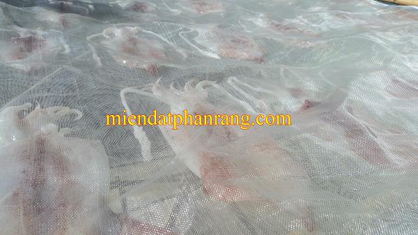 phơi mực khô có lưới chắn
