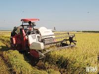 Khởi sắc nghành nông nghiệp công nghệ cao