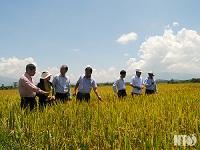 Toàn tỉnh hướng tới phát triển nông nghiệp bên vững