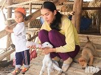 Nỗ lực chăn nuôi gia súc trong mùa khô ở vùng tâm hạn