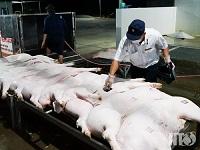 Nguyên nhân các sở giết mổ gia súc , gia cầm đạt chuẩn vẫn hoạt động kém hiệu quả