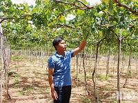 Vùng đất khô cằn và trang trại nho hữu cơ đầu tiên