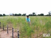 Kết quả của nỗ lực xây dựng đạt chuẩn nông thôn mới tại xã An Hải