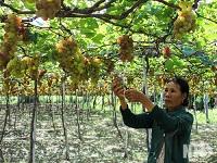 Hợp tác xã nông nghiệp hỗ trợ và phát triển