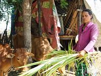 Nguồn vốn tín dụng chính sách được sử dụng hiệu quả tại Thuận Nam