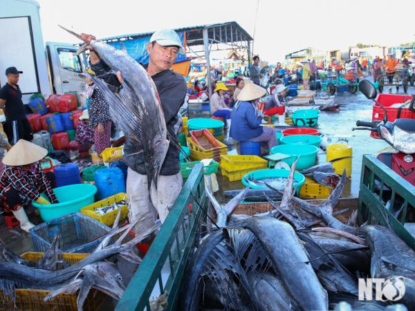 Khai thác hải sản có nhiều tín hiệu khả quan