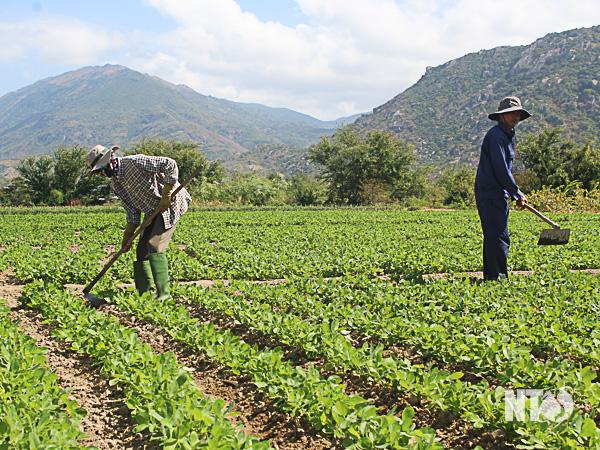 Giải pháp ứng phó hạn hán trong mùa khô của tỉnh