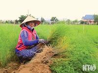 Đồng bào Chăm ở Ninh Phước tích cực đẩy mạnh phát triển kinh tế xã hội