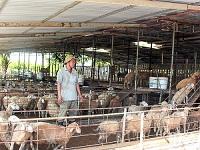 Chăn nuôi bền vững phát triển mạnh ở Ninh Phước